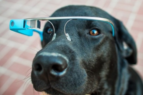 google-glass-dog